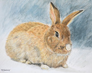 D Pastels Posters - Agouti Pet Rabbit Poster by Kate Sumners