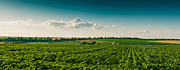 Agronomy Framed Prints - Agriculture Field And Perfect Sky Framed Print by Daniel Barbalata
