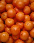 Agriculture - Field Of Tangerines Print by Joel Glenn