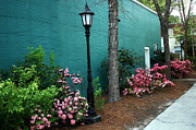 Garden Landscape Of Spring Art - Aiken South Carolina Garden Street Scene by Kathy Fornal