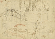 Planning Drawings Prints - Aircraft machine has been reduced to simplest shape wings directly put on human body by straps  Print by Leonardo Da Vinci