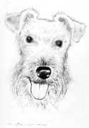 White Terrier Drawings - Airedale terrier by Kurt Tessmann