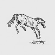 Wild Horse Drawings - Airs Above The Ground by Gretchen Almy