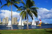 Ala Moana Metal Prints - Ala Wai Harbor Metal Print by Peter French - Printscapes