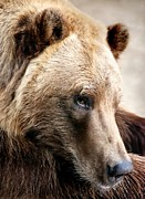 Kodiak Art - Alaskan Brown Bear by Jim Hughes