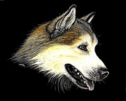 Huskies Prints - Alaskan Malamute Print by Jennifer Jeffris