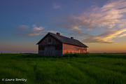 Canadian Prairie Landscape Posters - Alberta Prairie Sunset Poster by Laura Bentley