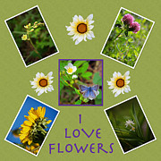 Digital Collage Photo Posters - Alberta Rocky Mountain Wildflowers Poster by Laura Bentley