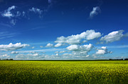 Field. Cloud Prints - Alberta Skies Print by Larysa Luciw