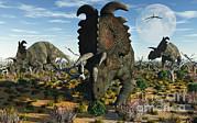 Albertaceratops Dinosaurs Grazing Print by Mark Stevenson