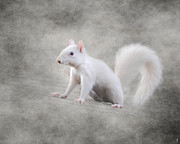 Good Luck Metal Prints - Albino Squirrel Metal Print by Jai Johnson