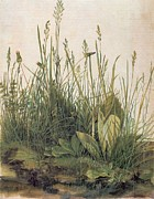 Turf Paintings - Albrecht Durer Great Piece of Turf by Albrecht Durer