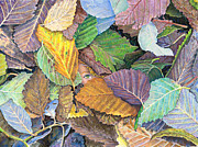 Birdseye Posters - Alder Leaves and Faerie Poster by Nick Payne