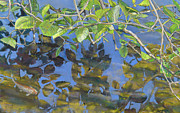 Birdseye Acrylic Prints - Alder Leaves and Pond Acrylic Print by Nick Payne
