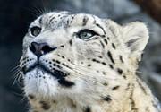 Leopard - Alert by Angelina Vick