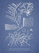 Algae Print by Aged Pixel