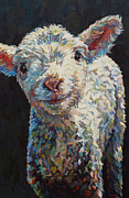 Ovine Framed Prints - Alice Framed Print by Patricia A Griffin
