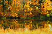 Yellow Leaves Prints - All A Blaze Print by Darren Fisher