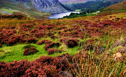 Guiness Posters - All about the Colors. Lough Tay. Wicklow Mountains. Ireland Poster by Jenny Rainbow