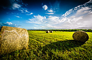 Hay Bales Photo Framed Prints - All American Hay Bales Framed Print by David Morefield