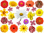 Online Flower Shop Prints - All beauty flower closeup Print by Boon Mee