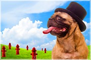 Pug Dogs Prints - All Dogs Go To Heaven Print by Edward Fielding