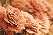 Peach Rose Photos - All the Orange Roses by Jennie Marie Schell