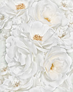 Green Rose Prints - All the White Roses  Print by Jennie Marie Schell