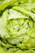 Lettuce Photos - All the Year Round by Anne Gilbert