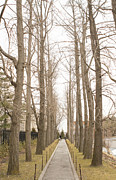 Tree Allee Framed Prints - Allee Framed Print by Hwan Lee