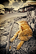 Greek Island Prints - Alley Cat Siesta In Grunge Print by Meirion Matthias