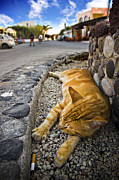 Ginger Cat Posters - Alley Cat Siesta Poster by Meirion Matthias