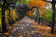 Fall Grass Prints - Alley with falling leaves in fall park Print by Michal Bednarek