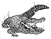 Warning Drawings - Alligator Ink by Jack Norton