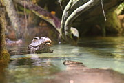 Alligators Photos - Alligator - National Aquarium in Baltimore MD - 12121 by DC Photographer