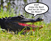 American Alligator Prints - Alligator Yall Come Back Card Print by Al Powell Photography USA
