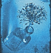 Medical Appeal Prints - Allium Cyanotype Print by Chris Berry