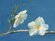 Canvass Posters - Almond blossoms Poster by Nurit Shany
