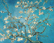 Plant Metal Prints - Almond branches in bloom Metal Print by Vincent van Gogh