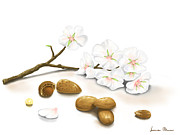 Digital Prints - Almonds Print by Veronica Minozzi