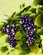 Vineyard Art Painting Posters - Almost Harvest Time Poster by Mary Ann King