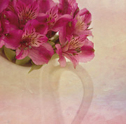 Alstroemeria Prints - Almost Print by Kim Hojnacki