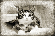 Black And White Photography Mixed Media - Aloha Kitty Painterly by Andee Photography