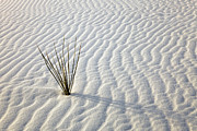 Grass Art - Alone in a Sea of White by Mike  Dawson