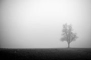 Alone In The Fog - Bw Print by Hannes Cmarits