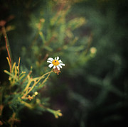 Dreamy Floral Fine Art Photos - Alone by Taylan Soyturk