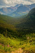 Along The Path To Iceburg Lake 19 Print by Natural Focal Point Photography