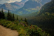 Along The Path To Iceburg Lake 21 Print by Natural Focal Point Photography