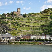 Vineyards Photo Originals - Along the Rhine by Matt MacMillan