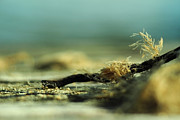Miniature Photos - Along the Sea-Coast by Rebecca Sherman
